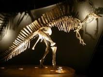 Venice's only dinosaur. Picture courtesy of www.msn.ve.it