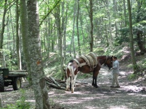 I didn't get a great shop of this work in progress. The pony kept getting in the way. Momma horse was hauling firewood out of the woods.