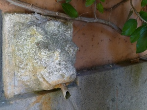 This eroded lion head fountain is the only source of water for our while building of 14 condos. He's over 100 years old.