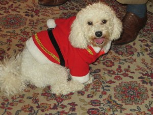 One of Princess Rita's bichon frises dresses for the occasion.