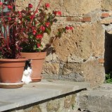 Kitty enjoys the sun in her garden. Lots of black and white cats indicating a shallow gene pool.