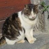 One of the feline residents enjoys February sun.