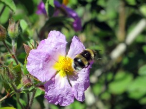 Wildflowers are abundant in May, and the bees made industrious.