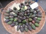 Artful avocados
