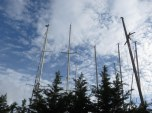 I love these masts sticking up out of a screen of trees. They are in dry dock.