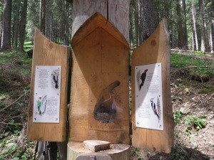 Upon opening the box we found a clever display about the woodpeckers in the area.