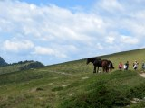 Horses also frequented the path.