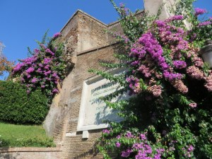 Bougainvilla still in bloom, the Vatican Gardens.