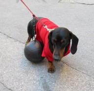 Poor puppy was forced to drag a (soccer) ball-and-chain.