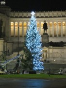 Tree in Piazza Venezia, nearing completion.