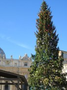 Tree in Piazza San Pietro.