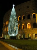 Love the tree juxtaposed against the Colosseo.