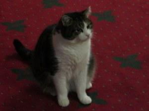 Frankie the hotel cat at Landhotel Strasserwirt.