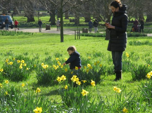 Admiring the daffodils in Green Park. the Queen was given 50,000 bulbs by the Dutch for her Jubilee. Schoolchildren planted them, Liz did not.
