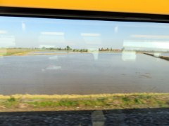 RIce paddies in Lombardia, as seen from our train. We've taken this trip many times, but never seen the fields flooded.