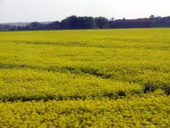 Rapeseed, planted on hundreds of acres across France, blooms beautifully in April. Sorry about the blurring. Taken from the train, you know.