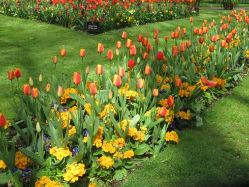 It may look like spring in London, but it was cold enough to waer gloves every day. The tulips did not care.