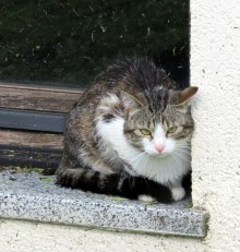 This little cat was giving me stink eye as we walked through the village.