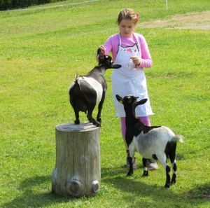 Goats being fed parsley stems at Marinzen.