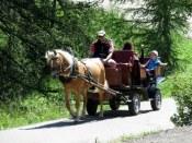 Horse drawn carriage on the Alpe di Siusi.