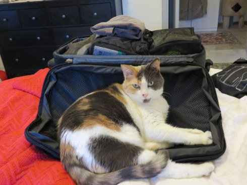 Libby never really gor used to our travels, but she coped well. Every trip she would hang out on-or-in Ric's siutcase while he packed. This last trip, she did not. I think she knew what was coming.