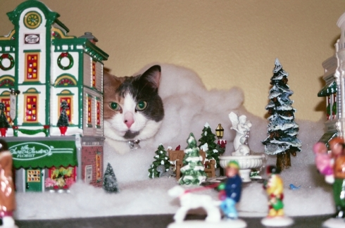 "In 2007, a photo of Libby sitting in the Christmas Village was included in the ""365 Days of Cats"" calendar. She was very proud!"