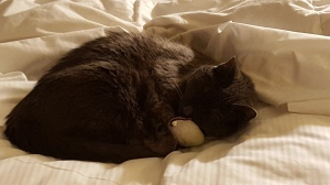 Janie relaxes with her mousie at the NH Hotel, Frankfurt,
