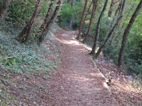 In the Bosco di San Francesco, a quiet path. We saw about 5 people in a one hour walk.