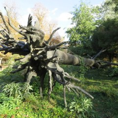 Bronze tree in the Tuileries Garden. Reminds me of Oregon only ours are natural.