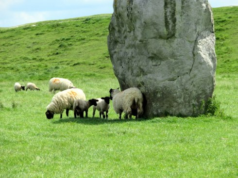 Sheep at Avebury
