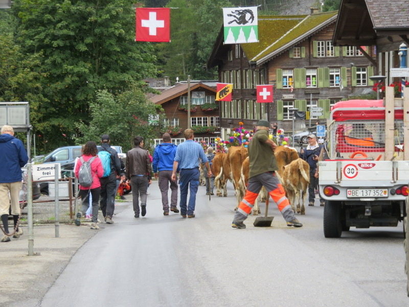 End of cow parade