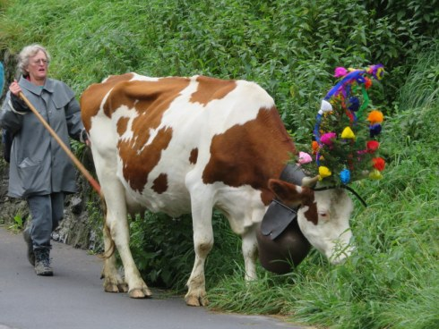 Cow with head dress