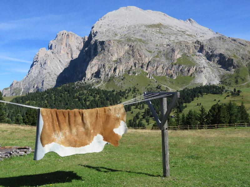 Sassopiatto and cow hide