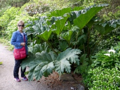 Does this plant make me look small?