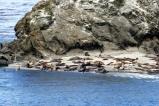 Sea lions on an island near Cape Arago.