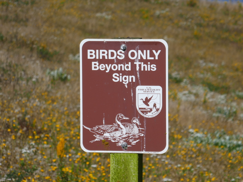 Birds Only sign