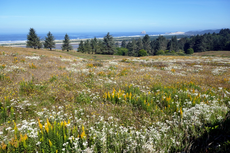 Meadow and ocean
